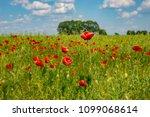 summer sunset at red field of... | Shutterstock . vector #1099068614