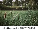 close up monochromatic grain... | Shutterstock . vector #1099072388
