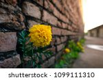 fake yellow flower on old brick ... | Shutterstock . vector #1099111310
