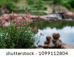 pretty pink flowers and... | Shutterstock . vector #1099112804