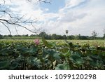 beautiful lotus flowers or lily ... | Shutterstock . vector #1099120298