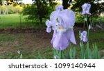 purple iris patch   Shutterstock . vector #1099140944