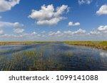 florida wetland in the...   Shutterstock . vector #1099141088