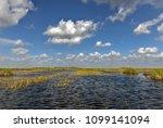 florida wetland in the...   Shutterstock . vector #1099141094