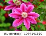 purple jar flower    Shutterstock . vector #1099141910