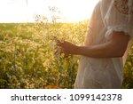 blooming aegopodium podagraria   Shutterstock . vector #1099142378