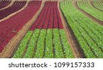 rows of colorful rainbow of... | Shutterstock . vector #1099157333