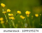 close up of a little yellow... | Shutterstock . vector #1099195274