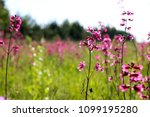 close up of a little violet... | Shutterstock . vector #1099195280