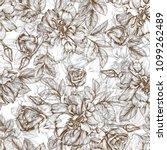 botanical illustration of...   Shutterstock . vector #1099262489