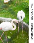 Small photo of The flamingo on a glade costs and pleases all with the beauty