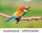 angry bird with a colorful... | Shutterstock . vector #1099326344