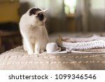 Black And White Cat Sits On The ...