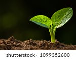 young plant growing with... | Shutterstock . vector #1099352600