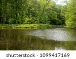 forest landscape in the spring... | Shutterstock . vector #1099417169