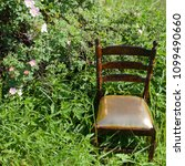 Small photo of golden mahogany chair on the side of the freeway in the green wheat field with a crowberry with blossoming rosehip
