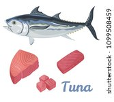 vector fresh tuna in flat style ... | Shutterstock .eps vector #1099508459