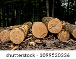 trees felled in the forest | Shutterstock . vector #1099520336