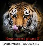 Close Up Tiger Licking His - Fine Art prints
