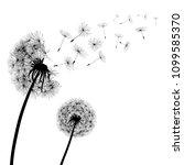 abstract black dandelions ... | Shutterstock .eps vector #1099585370