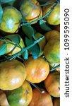 tangerines texture. tangerines... | Shutterstock . vector #1099595090