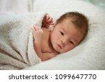 infant baby portrait. newborn... | Shutterstock . vector #1099647770