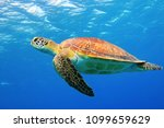 Stock photo sea turtle underwater swimming in the blue sea vivid blue ocean with turtle scuba diving with 1099659629