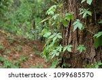 leaves surrounding tree trunk | Shutterstock . vector #1099685570