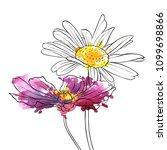 vector drawing daisy flowers ...   Shutterstock .eps vector #1099698866