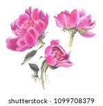 watercolor  flowers isolated on ... | Shutterstock . vector #1099708379