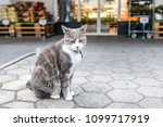a fluffy cat with collar sits... | Shutterstock . vector #1099717919