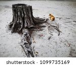 A Dog And Tree Stump Waiting...