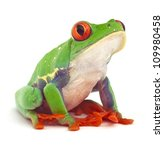 Red Eyed Treefrog Macro...