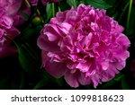 Cut Gorgeous Blossoming Violet...