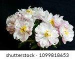 Beautiful Bouquet Of Cut Fadin...
