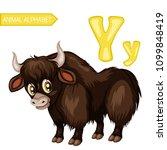 Animal Alphabet. Y Is For Yak....
