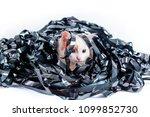 kitten redhead entangled in a... | Shutterstock . vector #1099852730
