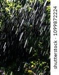 Summer Rain In The Garden On...