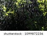 summer rain in the garden on... | Shutterstock . vector #1099872236