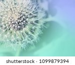 dandelion close up on abstract... | Shutterstock . vector #1099879394