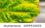 rear of a leaf and the light...   Shutterstock . vector #1099910453