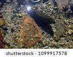 stony bottom of the sea ... | Shutterstock . vector #1099917578