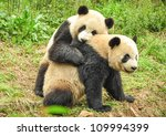 Stock photo two great pandas playing together 109994399