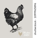 free range hens hen living in...   Shutterstock .eps vector #1099965896