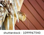 lizard basking in cuba | Shutterstock . vector #1099967540