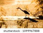grey heron  ardea cinerea ... | Shutterstock . vector #1099967888