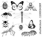 big set of vector insects... | Shutterstock .eps vector #1100034389