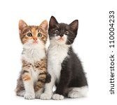 Stock photo two kitten sitting isolated on white 110004233
