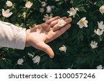 the beautiful  girl keeps a...   Shutterstock . vector #1100057246