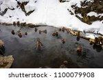 japanese snow monkeys relaxing ... | Shutterstock . vector #1100079908